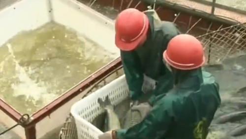 益阳大通湖:东捕撒下第一网 万尾鲜鱼出大湖