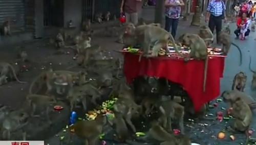 """""""猴子盛宴""""乱糟糟 原是猴城过""""猴节"""""""