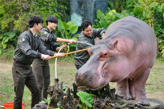 保护和爱护野生动物的立意