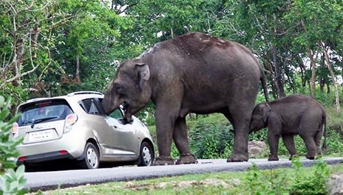印度大象趁游客自拍偷包