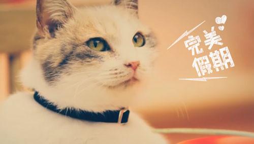 可爱猫咪 吃鱼 动图